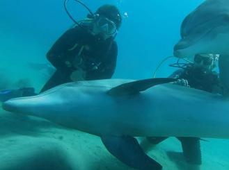 Dr. Mok scuba diving