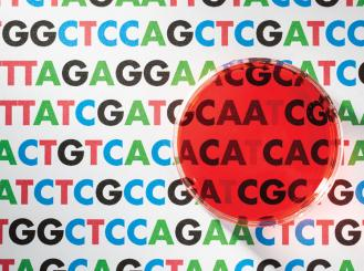 Graphic of petri dish and nucleic acid sequences